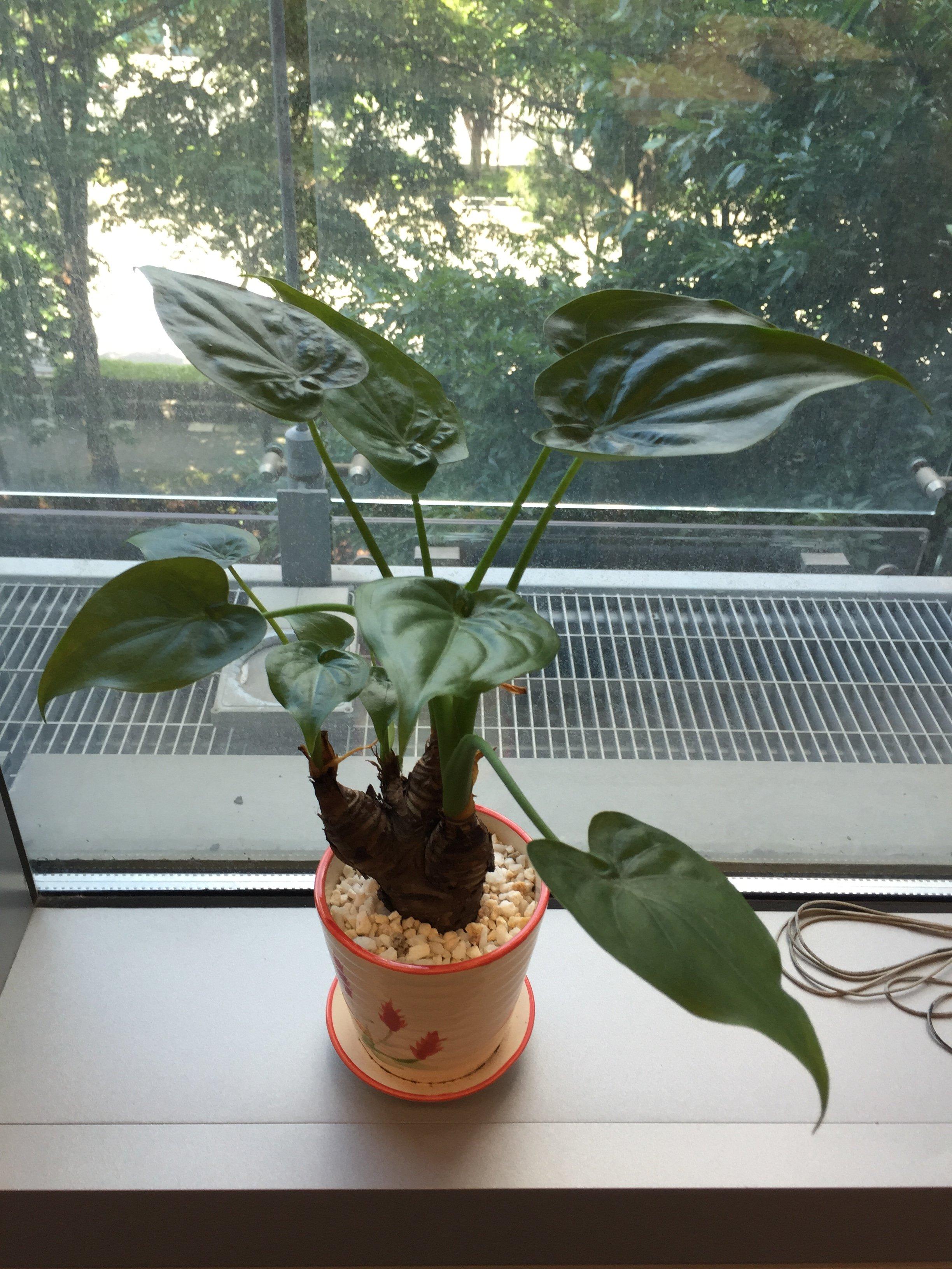 Office-Plant-2015-06-29.jpg