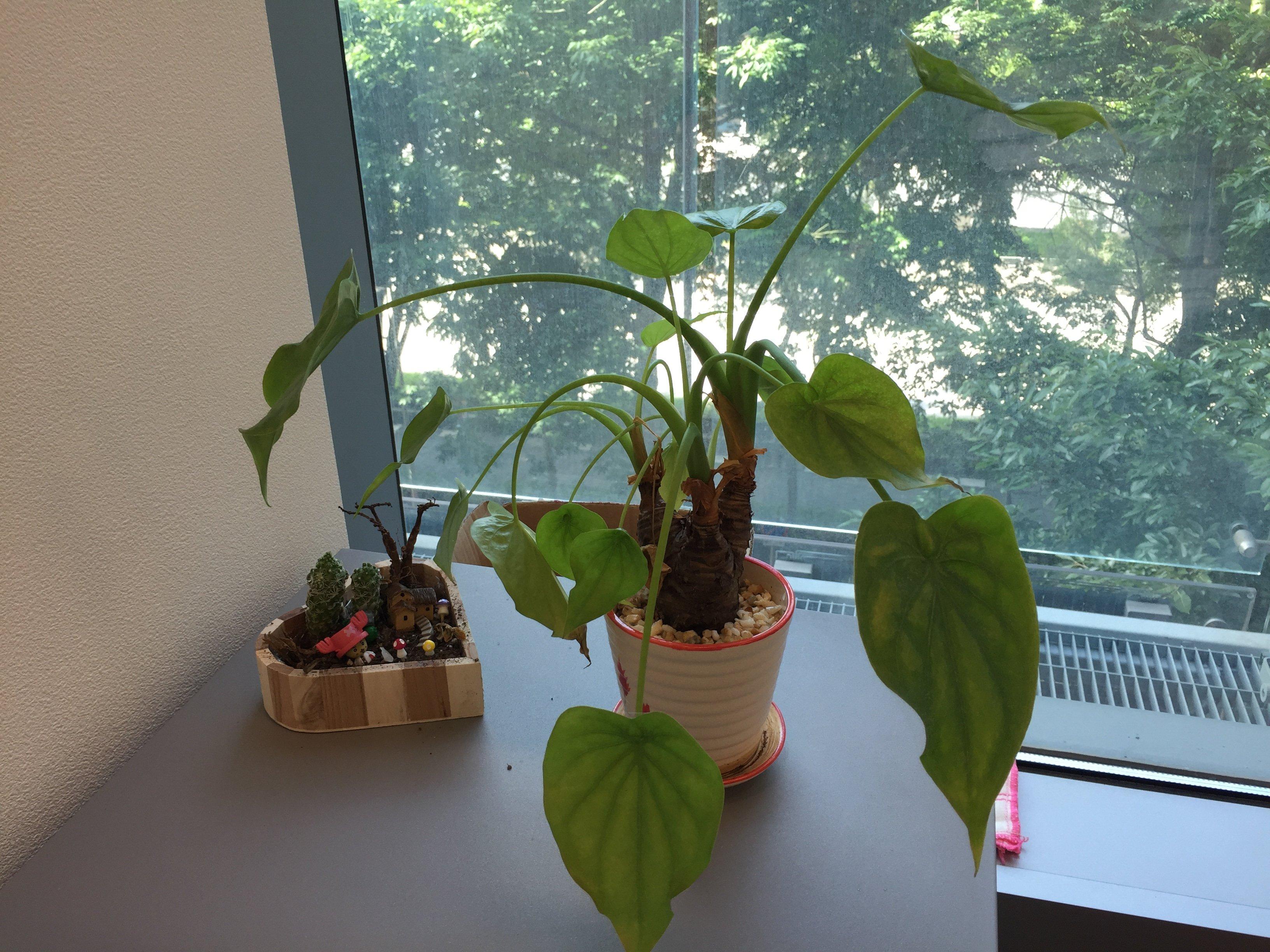 Office-Plant-2015-09-29.jpg